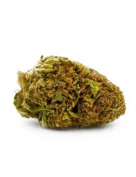 OG Kush - Greenhouse - Fleur de CBD